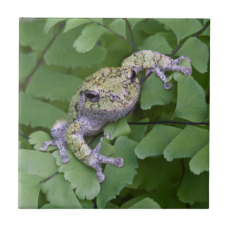 Gray tree frog on fern, Canada Small Square Tile