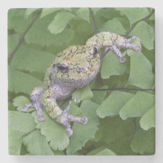 Gray tree frog on fern, Canada Stone Coaster