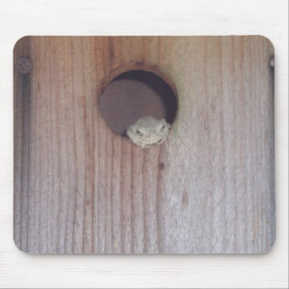 Gray Treefrog in a Box Mouse Pad