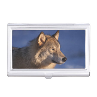 gray wolf, Canis lupus, in the foothills of 2 Case For Business Cards