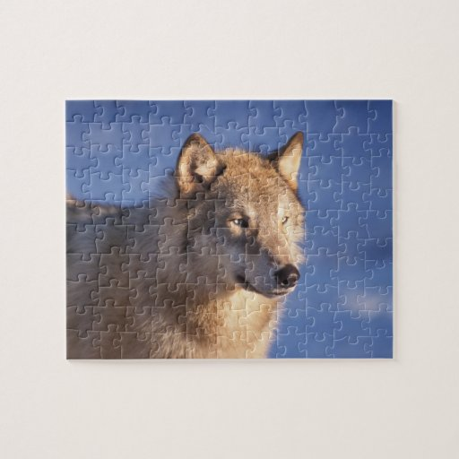 Gray wolf canis lupus in the foothills of the 2 jigsaw puzzle