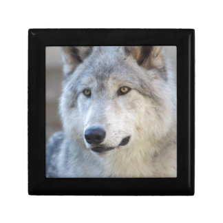 Gray Wolf Closeup Gift Box