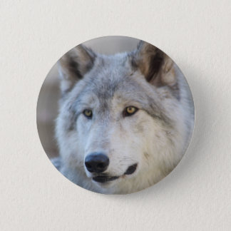 Gray Wolf Face 6 Cm Round Badge