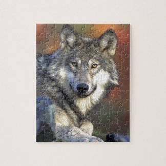 Gray Wolf Jigsaw Puzzle