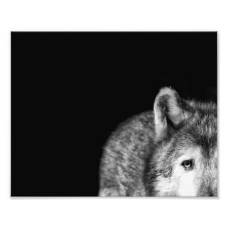 Gray Wolf Stare - Black and White Photo Print