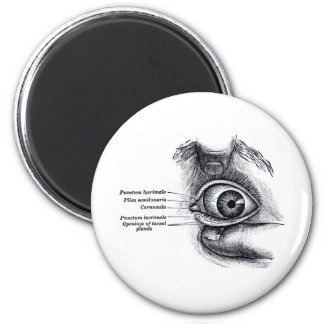 Gray's Anatomy —eyeball 6 Cm Round Magnet