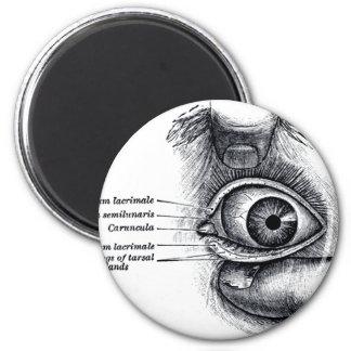 Gray's Anatomy —eyeball Refrigerator Magnets