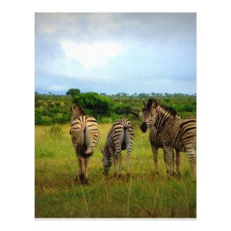 Grazing African Zebras Flyer