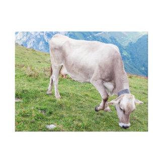 Grazing cow canvas print
