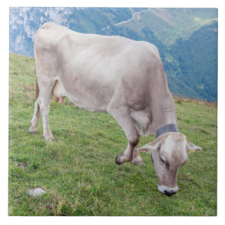 Grazing cow ceramic photo tile