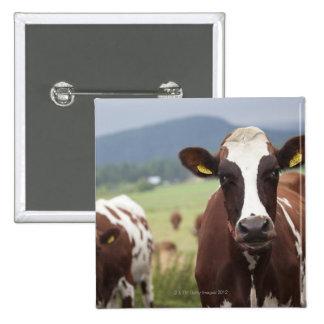 Grazing cows 15 cm square badge