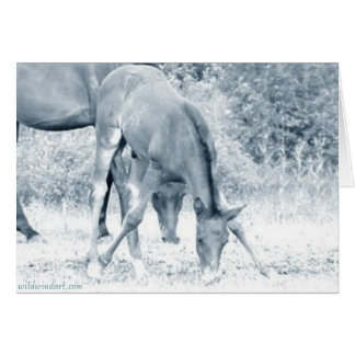Grazing Foal Greeting Card_Motivational Card