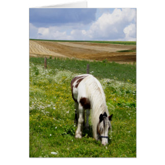 Grazing horse greeting card