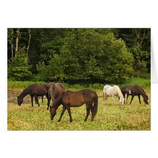 Grazing Horses Birthday Card