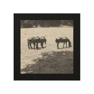 Grazing Horses Wood Canvases