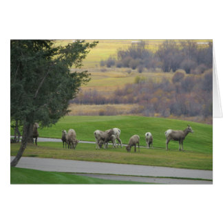 Grazing in Autumn Greeting Card