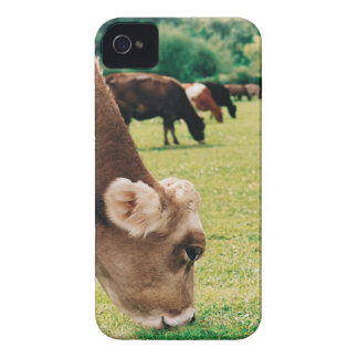 Grazing Jersey Cow iPhone 4 Cases