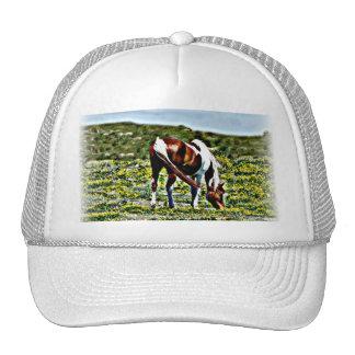 Grazing Paint Horse Mesh Hat