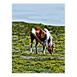 Grazing Paint Horse with yellow flowers Postcard
