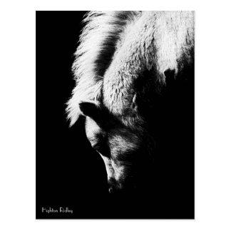 Grazing Pony - postcard