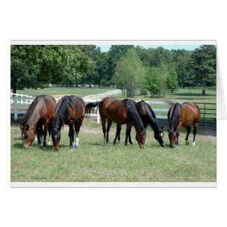 Grazing Quarter Horses Card