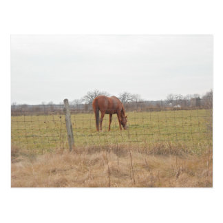 Grazing Ranch Chestnut Horses Postcard