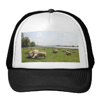 Grazing Sheep by the Rhine Cap