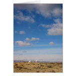 Grazing the Wind River Range, Wyoming Greeting Card