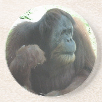 Great Ape Coasters
