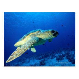 Great Barrier Reef, Australia 2 Post Card