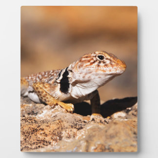 Great Basin Collared Lizard - Burr Trail - Utah Plaque