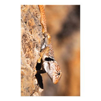 Great Basin Collared Lizard - Burr Trail - Utah Stationery Paper