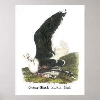 Great Black-backed Gull, John Audubon Print