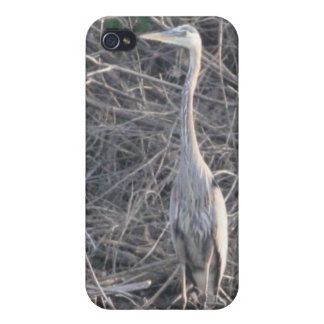 Great Blue Heron 4/4s iPhone 4/4S Covers