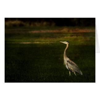 Great Blue Heron Against a Dark Background Card
