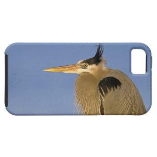 Great Blue Heron, Ardea herodias, adult, iPhone 5 Cases