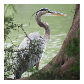 Great Blue Heron By The Tree Acrylic Wall Art