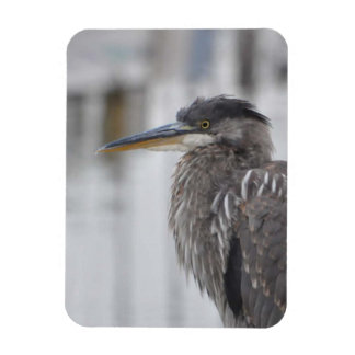 Great Blue Heron - Close Up Magnet