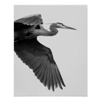 Great Blue Heron Crop black and white Poster