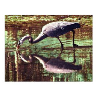 Great Blue Heron Fishing Postcard