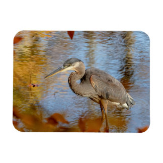 Great Blue Heron framed with fall foliage Magnet