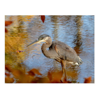 Great Blue Heron framed with fall foliage Postcard