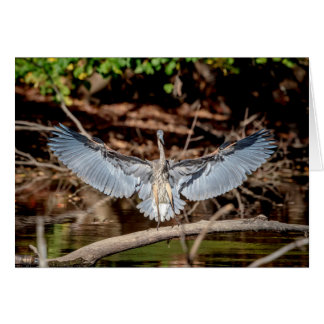 Great Blue Heron on a log Card