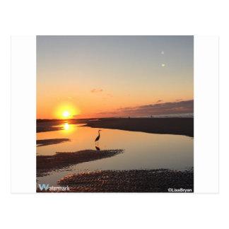 Great Blue Heron on beach Postcard