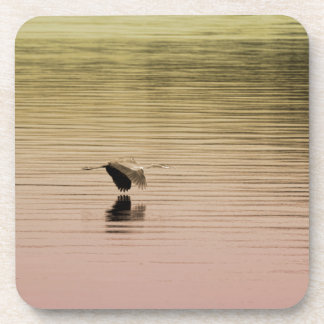 Great Blue Heron on Gradient Background Coaster