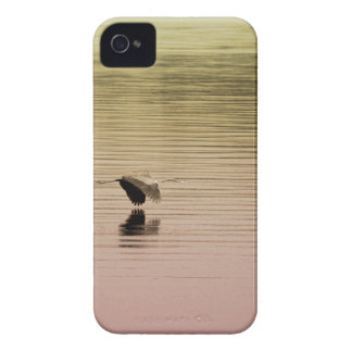 Great Blue Heron on Gradient Background iPhone 4 Cover