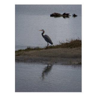 Great Blue Heron Postcard