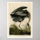 Great Blue Heron Posters