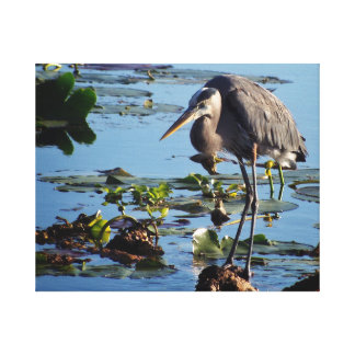 Great blue heron resting at lakeside canvas print