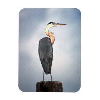 Great Blue Heron Standing Magnet
